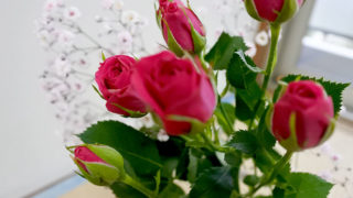 4月のお花としてスプレーバラでお花のある生活を