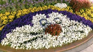 ドラえもんの花壇