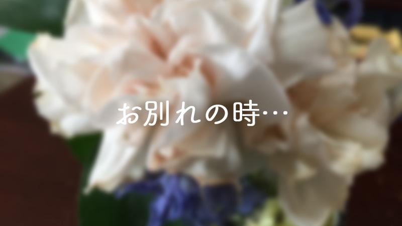 ライフルフラワー4月のお花とのお別れ