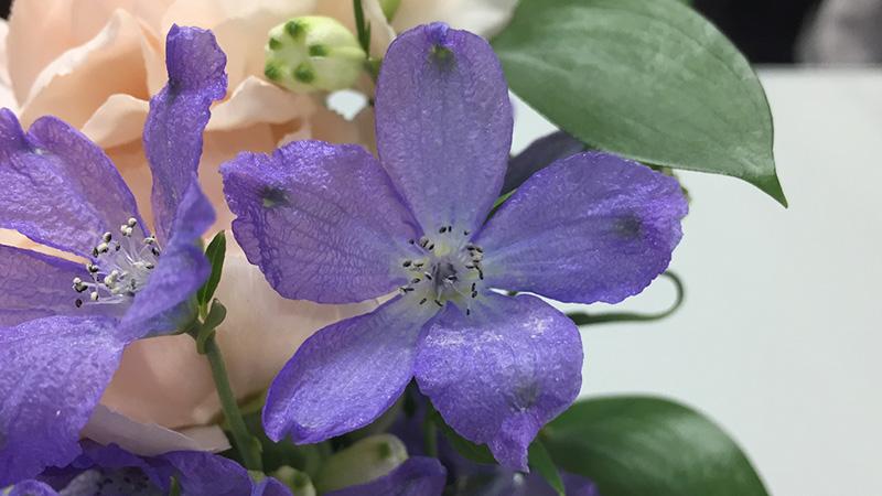デルフィニウム(紫)