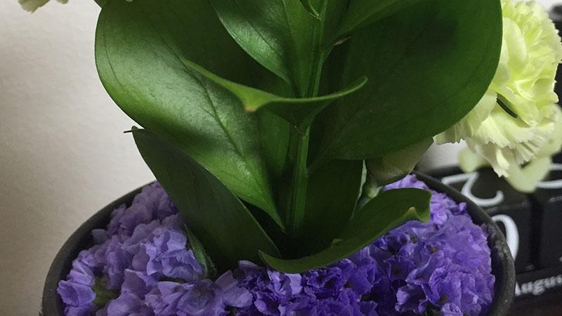 チース(淡紫)