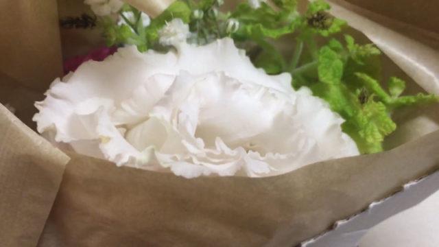 【ブルーミーライフ】お花の定期便、8月2日分が到着したので開封レビュー